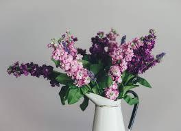 uncategorized decorative plants indoor best indoor plants indoor
