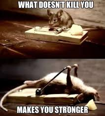 Rodent Meme - 25 funny animal memes to make you laugh till you drop
