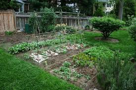 beautiful how to plant a vegetable garden sensational inspiration