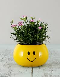 Smiley Face Vase Buy Dianthus In A Smiley Face Pot Plants Netflorist