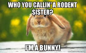 Rodent Meme - who you callin a rodent sister i m a bunny regretful rabbit