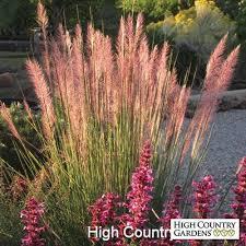 heat loving plants 802 best garden inspiration images on pinterest backyard ideas