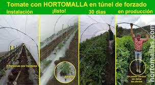 صور الطماطم hortomallas supporting your crops