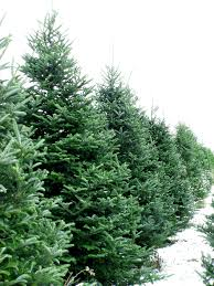 christmas tree lot opens belleville farm u2014 eckert u0027s family farms
