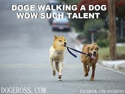 Doge Dog Meme - doge walking a dog meme database what lol