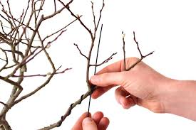 wiring bonsai trees to shape and bend the branches bonsai empire