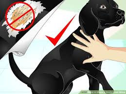 How to Make a Dog s Coat Shine 9 Steps with wikiHow