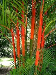 Tropical Landscape Ideas by Best 25 Tropical Landscaping Ideas Only On Pinterest Tropical