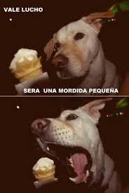 Omaiga Meme - image 461347 oye lucho el perro del lucho know your meme