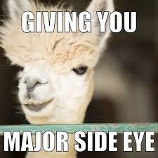 Alpaca Meme Generator - alpaca memes google search alpacas pinterest alpacas
