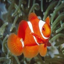 floran fish view specifications details of aquarium fish by