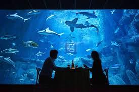 chambre aquarium ubi bene installe une chambre au milieu des requins pour airbnb
