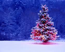 christmas trees decorated outside u2013 happy holidays