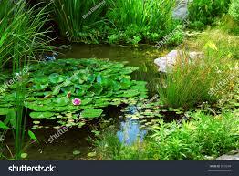 british native plants garden design garden design with native british pond plants for