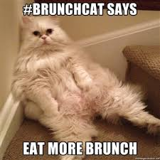 Sneaky Cat Meme - brunch is now available all day sneaky dee s