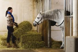 The Health Barn Choices For Feeding Hay The 1 Resource For Horse Farms Stables
