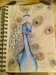25 unique peacock drawing ideas on pinterest peacock sketch