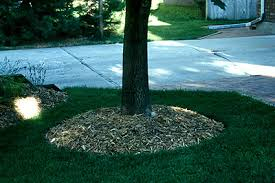mulching is important for tree health