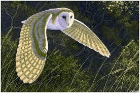 barn owl david chandler firefly books