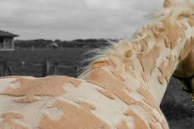 hairstyles for horses horse hairstyles archives countryhabit