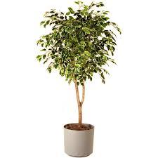house plants tree with concept image 3448 iepbolt