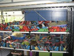 Cages For Guinea Pigs Proper Cages For Your Guinea Pig This Can Also Ask An Animal