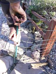 how to install and protect gardens with raccoon fencing