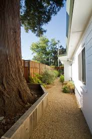 redwood trees landscape transitional with side yard glow in the