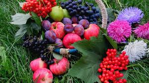 flowers and fruits flowers fruits wallpaper 77290