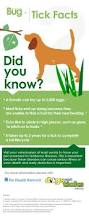 63 best natural insect bug tick repelent images on pinterest