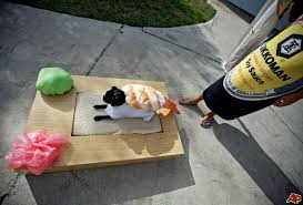 Pet Halloween Costumes 10 Pets Respond To Their Humiliating Halloween Costumes From