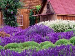 lavender cottage computer wallpapers desktop backgrounds
