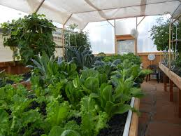 auquaponics junior grow your own organic vegetables and fish in