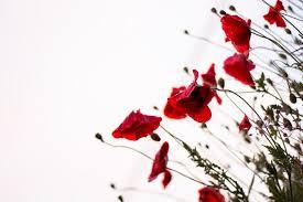 arri鑽e plan du bureau gratuit 1001 images pour un fond d écran fleur magique