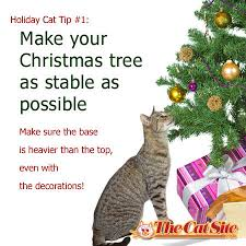 11 must tips to keep cats safe during the holidays the cat site