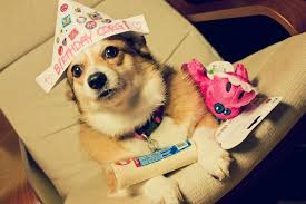 Birthday Cake Dog Meme - 17 animals who are having the worst birthday ever