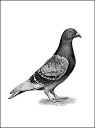coloring pages a pigeon or bird to color birds and birds and
