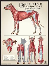 Dog Anatomy Poster Canine Muscle Multi View Chart
