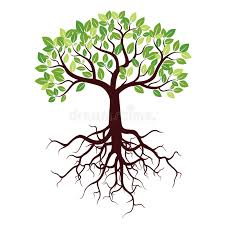 tree with roots and leafs stock illustration illustration of