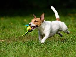Dog In The Backyard by Make The Backyard A Blast With These Fun Outdoor Dog Toys