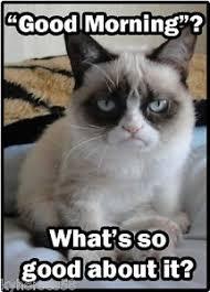 Good Morning Cat Meme - funny cat humor grumpy cat good morning refrigerator magnet ebay