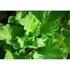 646 best vegetable fruit and flower garden images on pinterest