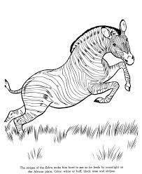 zebra에 관한 38개의 최상의 이미지