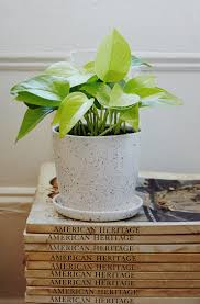 8 Houseplants That Can Survive by The Plant Hunter Blog The Sill