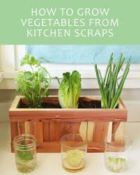 here u0027s how to give your vegetable scraps a new life scrap