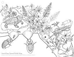 endangered species coloring pages picture pages bring the antioch dunes to life bio accumulation