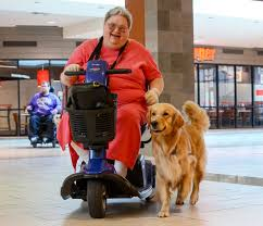 evaluating assistance dog organizations helping paws