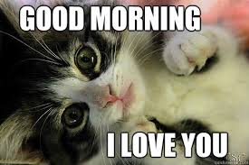 Cute Good Morning Meme - 20 adorable and cute good morning memes sayingimages com