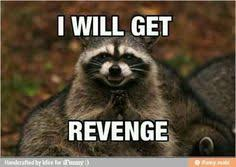 Evil Raccoon Meme - pin by courtney fischer on animals pinterest memes and humor