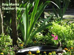 boy mama easy backyard bird bath boy mama teacher mama